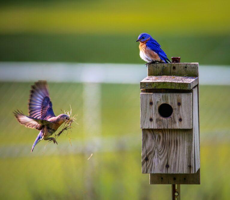 Schron Trzeciego Wieku: warsztat budowania domków dla ptaków