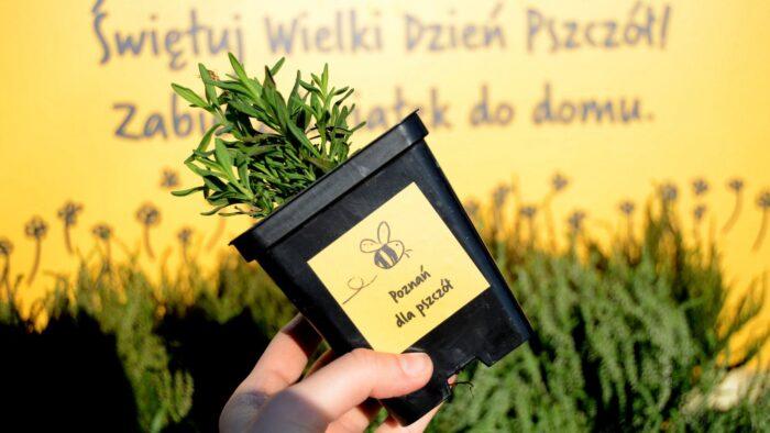 """Zdjęcie przedstawia doniczkę z roślinką z napisem """"Poznań da pszczół"""""""